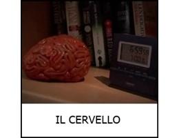 _CERVELLO